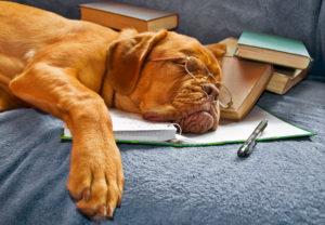 Hundeführerschein und Sachkundenachweis - verwirrt?