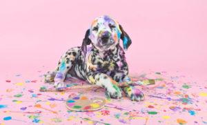 Der Weg zum Hundeführerschein kann sehr bunt sein